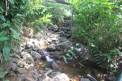 054 (balagopalmohan) Tags: rain country wyanad
