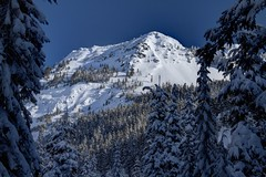 Covered (Andrew E. Larsen) Tags: winter white snow cold snowshoeing wintersky snoqualmiepass papalars andrewlarsen andrewlarsenphotography