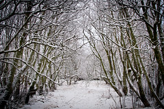 The Adventure Forest (Kristin Sig) Tags: trees winter snow forest adventure tr snjr vetur skgur vintri