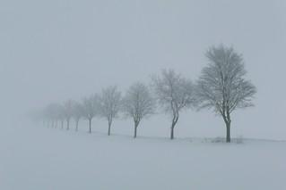 Wegsaum mit Bäumen im Winter