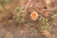 untitled-0691 (JLovesCoffee) Tags: flower canon 7d february boken 35l prisming
