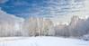 Snow Trees ... (Alex Verweij) Tags: blue trees winter sky cloud white snow tree canon bomen blauw sneeuw wolken boom wit 1022mm almere wolk 2013 lumierepark alexverweij 10febr13