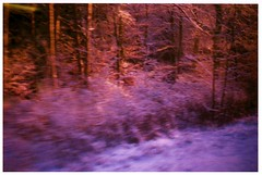 (agalerabranca) Tags: schnee winter snow france window forest train tren ventana deutschland frankreich hiver nieve zug bosque alsace alemania invierno neige francia allemagne fort elsass badenwrttemberg mitteleuropa alsacia alemaa