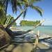 Spiaggia di Punta Mona
