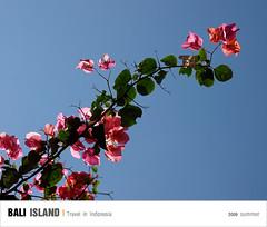 D3_Flowers (Ache_Hsieh) Tags: travel flowers summer bali digital indonesia island olympus e3 swd 巴里島 zd 蜜月 印尼 1454mm2835 50200mm2835