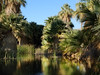 I'd never really believed in oases (*CA*) Tags: california palmsprings palmtrees oasis californiafanpalm thousandpalmspreserve mccallumpond