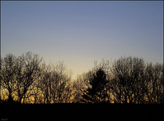 TREES (Sheba53) Tags: trees winter sunset sky tree nature silhouette silhouettes rhodeisland wintersky stumppond smithfieldrhodeisland