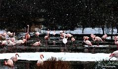 (stefano magon) Tags: city snow zoo switzerland nikon basel neve svizzera citt basilea d90 2013 rememberthatmomentlevel1