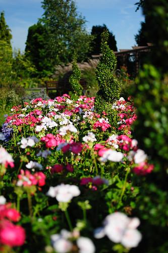 Burnby Hall Gardens - Victorian Garden, tilt-shift