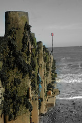 Hornsea Beach (Alex Tanton) Tags: sea white black seaweed beach horizon groins hornsea