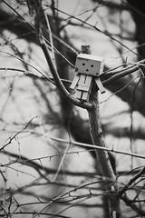 Now what? (Jchales.co.uk) Tags: trees white black tree film vintage toy japanese climb amazon box grain reservoir climbing twigs essex chelmsford brances danbo hanningfield