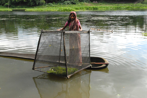 Cage culture in Magura, Bangladesh. Photo by Khaled Sattar, 2006.