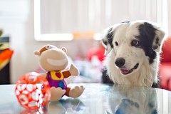 Mine?! (Anda74) Tags: toys bordercollie ouzo canonef50mmf14usm