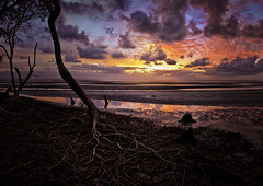 Don't Walk Alone in grey & Dark Nights (southern_skies2) Tags: ocean trees clouds sunrise reflections mud roots australia newyear mangrove queensland mudflats moretonbay beachmere