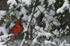Cardinal (Lito AKA Lito ☀) Tags: delete10 delete9 delete5 delete2 deleted7 delete6 save3 delete8 delete3 delete delete4 save save2 save4 save5 save6