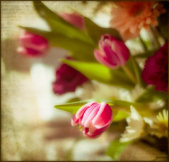 Musical Pinks (lclower19) Tags: pink red music white texture daisies 50mm nikon kim tulips peach gerbera klassen orton carnations ttt d90