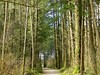 Green Timbers Park, B.C. (careth@2012) Tags: scenery chariotsofnaturelevel3 chariotsofnaturelevel1 chariotsofnaturelevel2