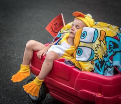 Une dure journe (maoby) Tags: pourpre nikon d500 50135mm tokina dure child canard duck young jeune