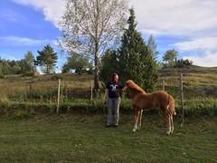 Malin och Villiemay (Patrick Strandberg) Tags: iphone iphone6 finspng stergtland sweden hst fl horse icelandichorse islandshst villiemay