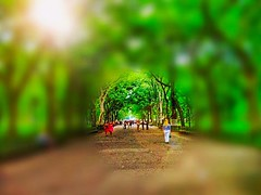 Walk through (drewweinstein34) Tags: wild ny life effect natural park newyorkcity effects art flickr nature people parks centralpark manhattan nyc