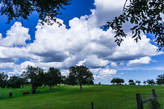 Lull Before the Storm (Sonia Argenio Photography) Tags: clouds bluesky blue sky pasture fence trees farmfield oaks lullbeforethestorm lull cloudy ocala florida ocalafl bysoniaa soniaargenio flickr flickrsoniaargenio flickrsoniasgallery