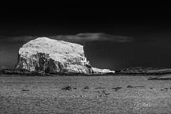 North Berwick - Bass Rock - 07.jpg (ibriphotos) Tags: blackandwhite northberwick gannet beach bass eastlothian seabird break friends polariser riverforth polarizer firthofforth daytrip weekend caravan