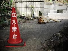 TERRITORY (Sign-Z) Tags: fujifilmx30 ps   dog