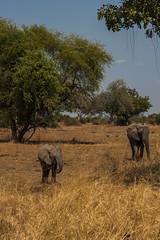 Zambia_LionCamp_163_elephant (atkiteach) Tags: zambia southluangwanationalpark southluangwa safari safaricamp camp nature naturereserve holiday rural africa lioncamp elephants elephant elephantcalf calf