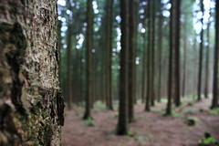 Hinterm Baum (flycasswill) Tags: wald baum unscharf natur
