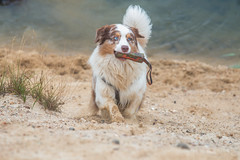 KW 37 2016 (GuinTheReal) Tags: baggersee dog dogs hund hunde kw372016 natur see