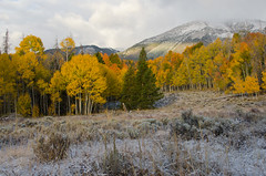 First Snow (AWDPWNZ) Tags: snow snowing first fall winter mountians leafs leafers colors sno landscape dillon co colorado