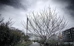 Edit Ver.IG #fineart #streetphotography #ktpics #eyeemoninstagram #DrasticEdit #ptk_japan #lovers_nippon #perspective #ig_street #wu_japan # #japanlovers #ig_japan #trees #japan_daytime_view #streetlife_award #eyeem # #500px #streetdreamsmag #ige (KT.pics) Tags: instagram edit verig fineart streetphotography ktpics eyeemoninstagram drasticedit ptkjapan loversnippon perspective igstreet wujapan  japanlovers igjapan trees japandaytimeview streetlifeaward eyeem  500px streetdreamsmag instagood igersjp discovertokyo curatethis1x artofvisuals  ominous mysterious landscapes streetmagazine