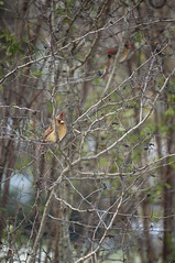 (wolffriend333) Tags: birds tennessee feeders bushes churchhill avians