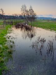 Source of The River Test (dave.tay1or) Tags: test river landscape four lumix olympus hampshire micro omd ashe thirds lightroom rivertest hants 14mm em5 lightroom3