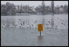 Attention danger ! Fuyons ! (Christophe Hamieau) Tags: winter lake snow cold ice seagull hiver lac neige froid glace goéland valdoise enghienlesbains