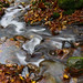Creek, William Griffin Park