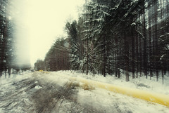 winterrrrrrrrrrrrr (Rambynas) Tags: trees winter snow forest lithuania lietuva camerapainting žiema miškas medžiai