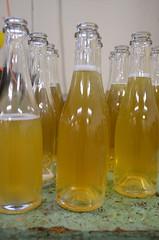 Bottling cider (Jacob Damgaard) Tags: apple wine bottles champagne cider sugar danish apples bottling applewine