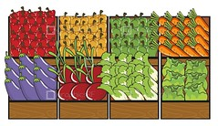 Image ID: 125864 (graphicsrf) Tags: wood red food color green vegetables yellow shop fruit illustration stand wooden colorful graphic market sale drawing many eggplant picture container lettuce eat health cabbage carrot tray material boxes carrots various brinjal beetroot arrangement celery isolated capsicum nutrition