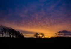 Dawn (intrazome) Tags: trees light sun nature weather silhouette yellow night sunrise landscape nikon purple cloudy d5100