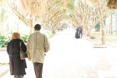 Jardin d'essai - Algiers - Algeria (milkahizo) Tags: old people brown tree green love walking algeria back big long day jardin couples grand vert maghreb valentines marron arbre parc algrie algiers alger guarden dessai