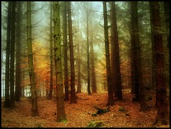 EntryClearance (BphotoR) Tags: november autumn trees light orange fog forest germany nebel hessen herbst bosque wald herbstwald odenwald bergstrasse sdhessen supershot abigfave forestofodes canonpowershotg10 coth5 bphotor