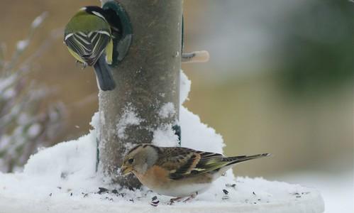 Winter bird feeders 06
