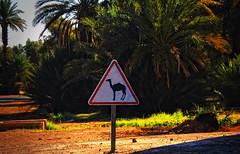 "Morocco day 4<br /><span style=""font-size:0.8em;"">Follow our road trip at --- > <a href=""http://www.bagpacktraveller.com"" rel=""nofollow"">www.bagpacktraveller.com</a></span> • <a style=""font-size:0.8em;"" href=""http://www.flickr.com/photos/58790610@N06/8489299449/"" target=""_blank"">View on Flickr</a>"