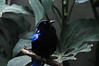 A Blue Bird (thelisten) Tags: life blue tree bird nature animal zoo photo natur blau vogel sittin
