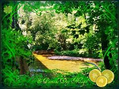 Neshaminy Gold (MissyPenny) Tags: gold pennsylvania emerald buckscounty stpatricksday neshaminy neshaminycreek pdlaich missypenny