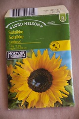 Solsikke / sunflower (@abrunvoll) Tags: vegetables gardening seeds sunflower hage solsikke fr 2013 uniflorus gronnsaker