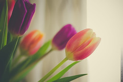 Spring Is In the Air [Explored] (Jano Silva DC) Tags: flowers plants canon spring tulips florist bouquet tamron odc2
