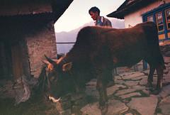 him and his (Keitha Haycock [rambling woman]) Tags: nepal camp mountains film trek 35mm town pentax kodak hike himalaya expired dagchu