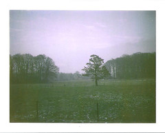 72/365 (daphne og.) Tags: trees snow cold tree film project landscape polaroid days fields 365 690 expired 103 landcamera 100iso
